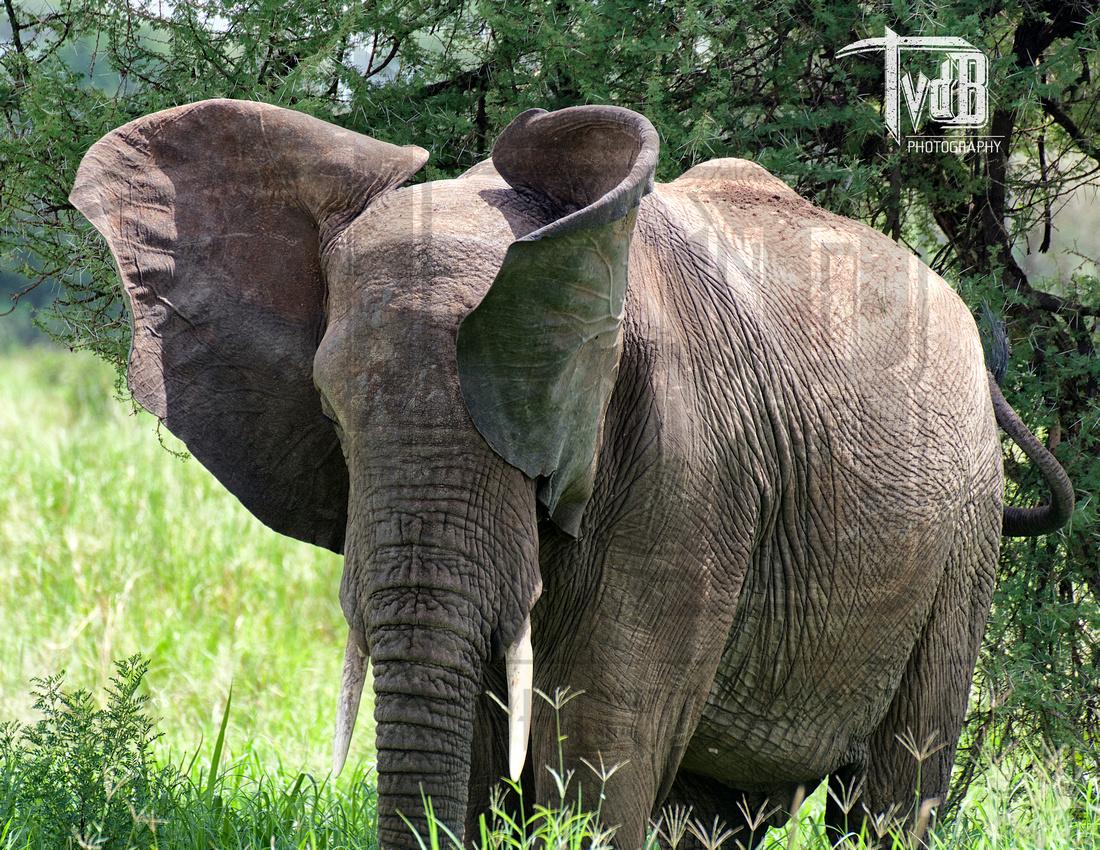 Dreams of Dumbo